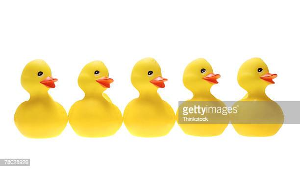 Still life of five yellow ducks in a row.