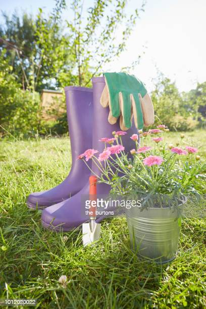 still life of gardening equipment - purple glove stock pictures, royalty-free photos & images