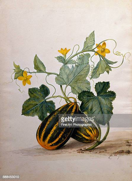 A Still Life of Gourds and Flowers by Pieter Withoos