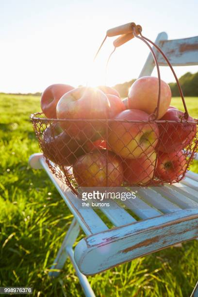 still life of of apples in a basket on chair on meadow - apple harvest stock pictures, royalty-free photos & images