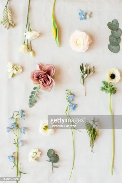 Still life of pastel coloured leaves, flower heads and flower stems, overhead view