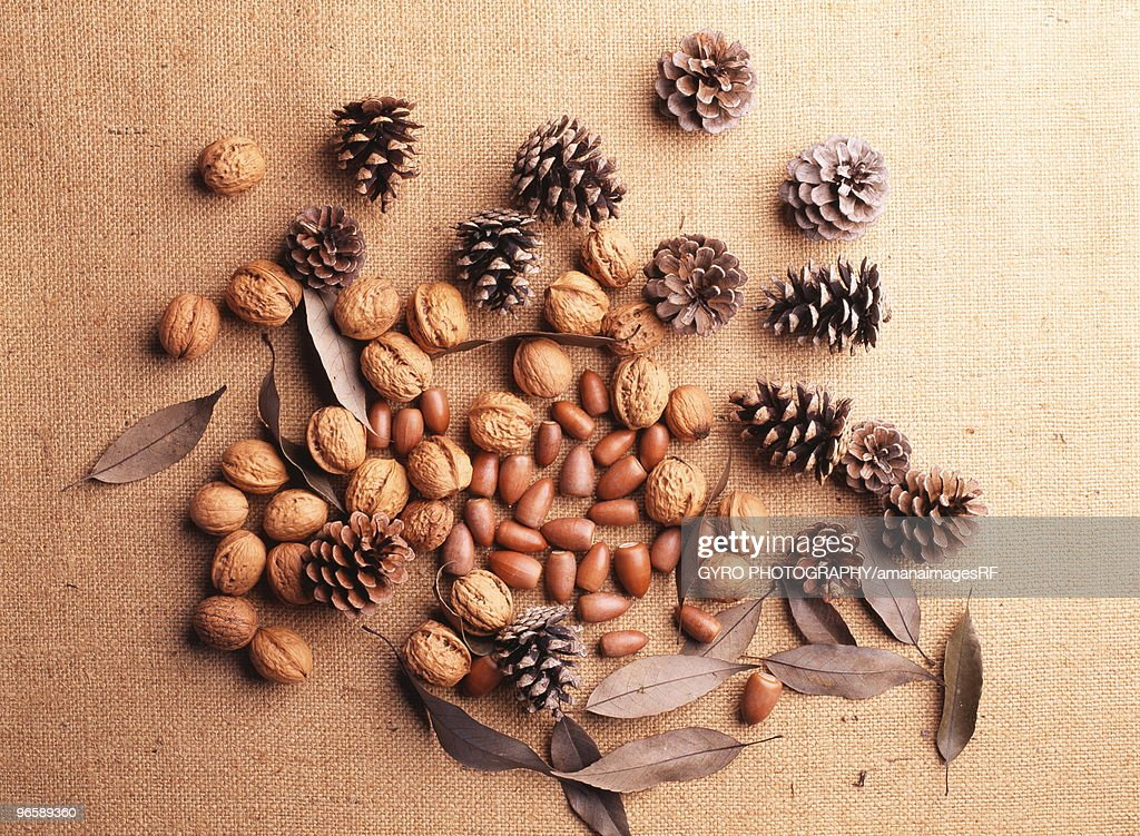 Still life of pine cones, walnuts and acorns : Foto stock