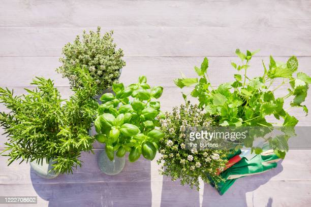 still life of potted fresh herbs, shovel and garden gloves on wooden background in summer - pot plant stock pictures, royalty-free photos & images