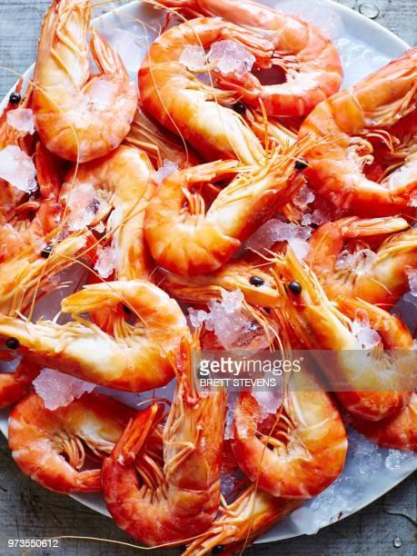 still life of tiger prawns on ice, overhead view - 車海老料理 ストックフォトと画像