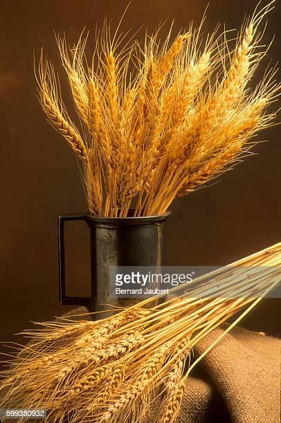 Still life of wheat