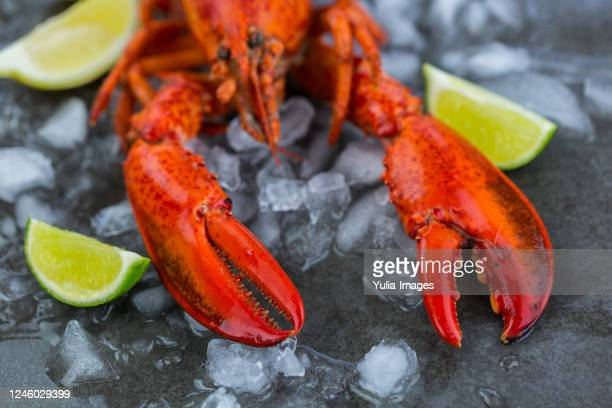 still life of whole fresh red lobster - red lobster restaurant stock pictures, royalty-free photos & images