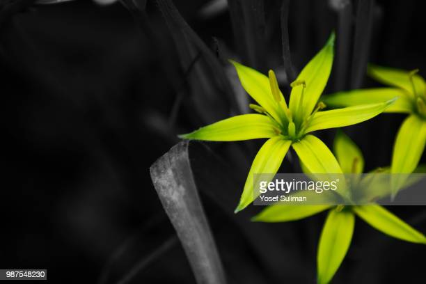 still life - lily jordan stock pictures, royalty-free photos & images