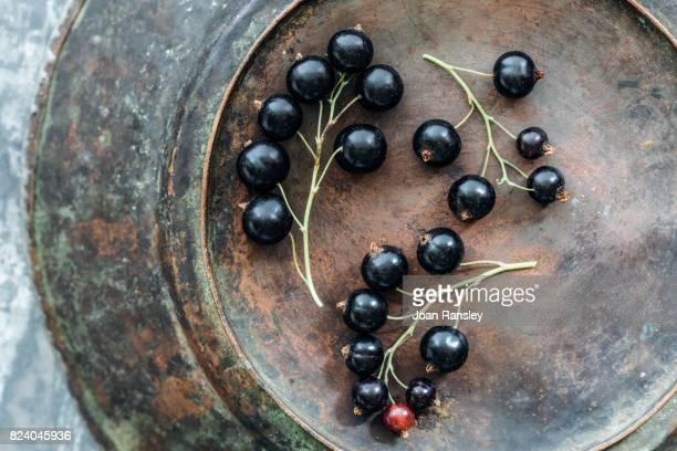 Still life portrait of blackcurrants