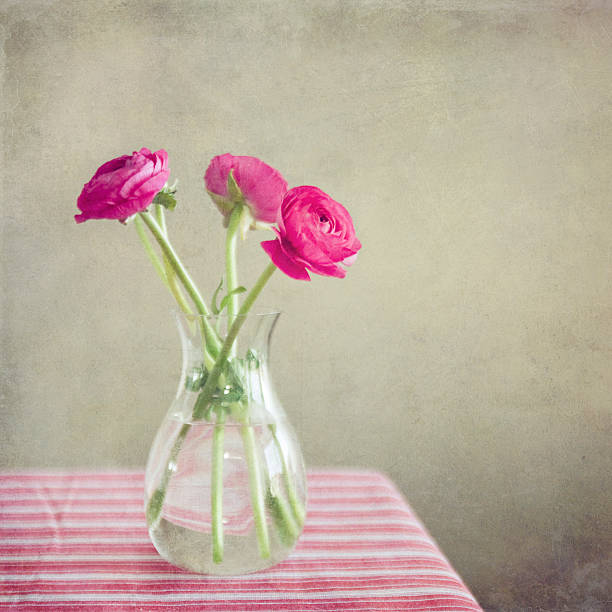 Still Life, Ranunculus flowers