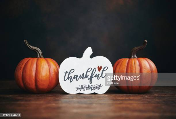 still life thanksgiving background with vibrant pumpkins and holiday message - gratitude stock pictures, royalty-free photos & images