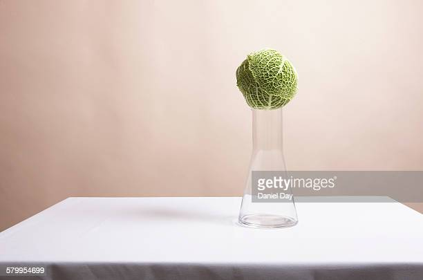 Still life with a cabbage