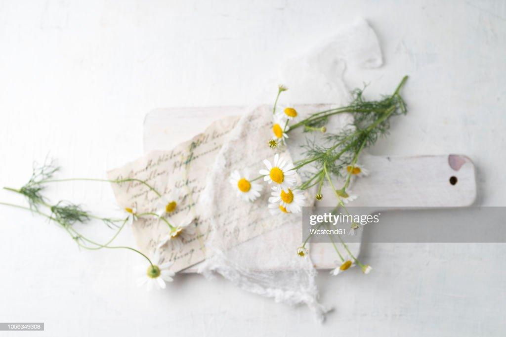 Still life with chamomile flowers : Stock Photo