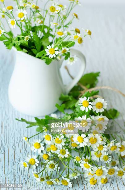 still life with chamomiles - chamomile tea stock photos and pictures