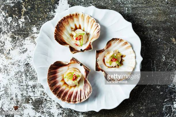 still life with cooked scallops in scallop seashells, overhead view - scallop stock photos and pictures