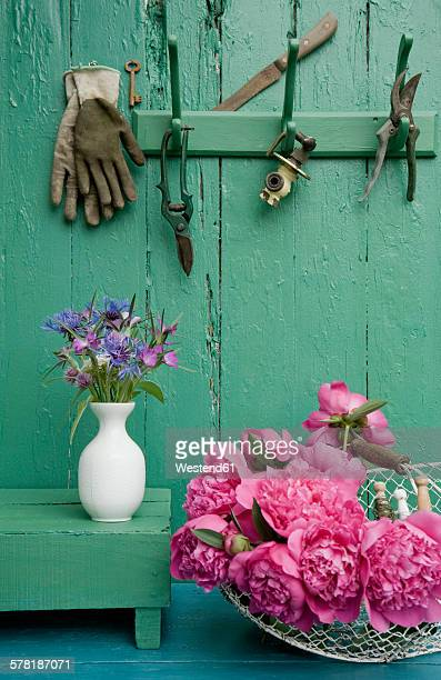 still life with garden flowers and different gardening tools - pruning shears stock photos and pictures