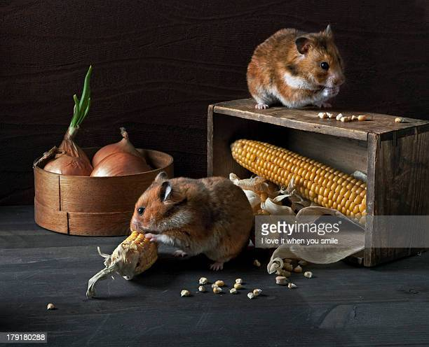Still Life with hamsters, onions and corn