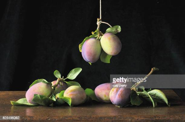 Still Life with Heritage 'Vision' Plums