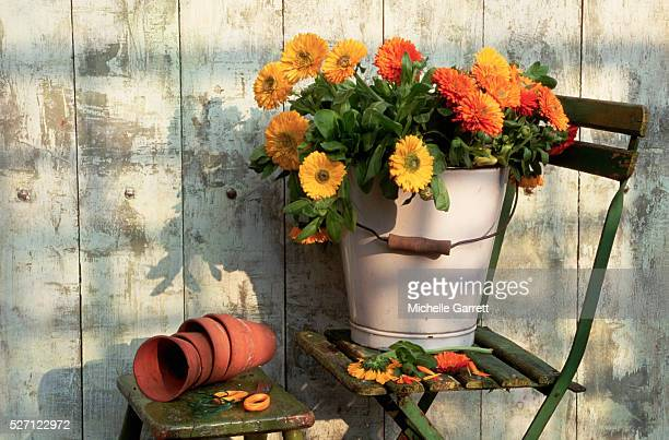 Still Life with Orange and Yellow Marigolds