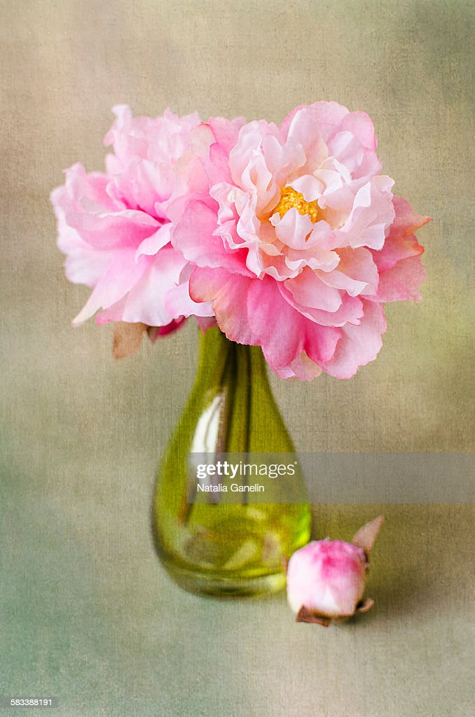 Still life with peonies : Stock Photo