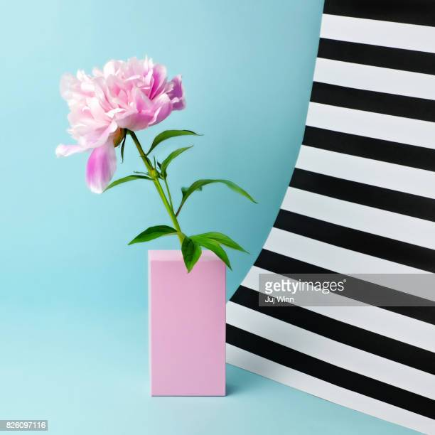 Still life with pink peony and striped background
