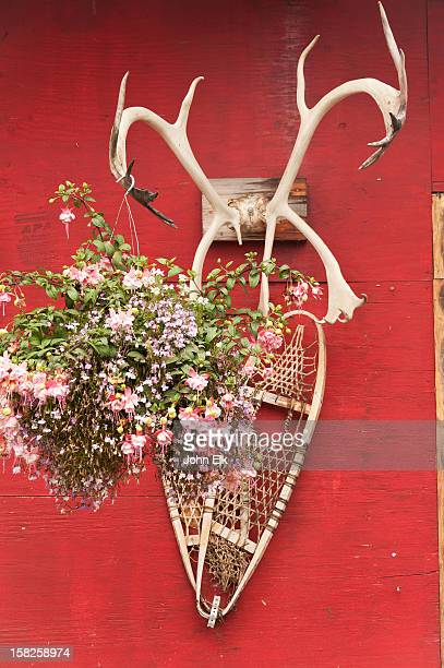 Still life with snowshoes and antlers