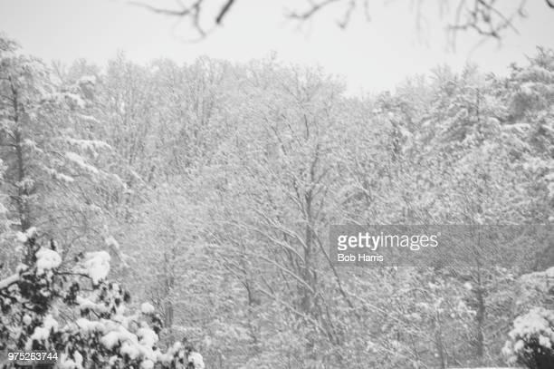 Still snowing - My Backyard