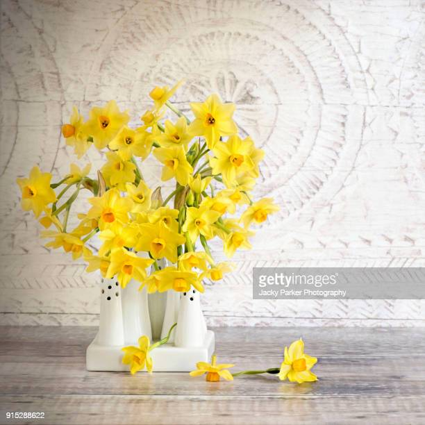 still-life image of spring yellow daffodils or daffs in a white china vase flowers also known as narcissus - daffodils stock photos and pictures