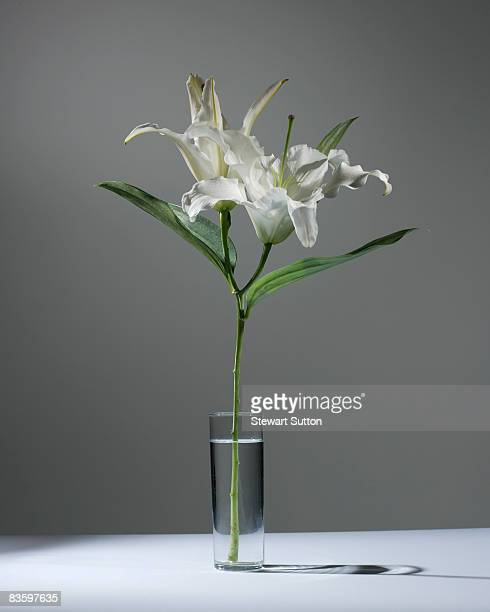 still-life shot of lilies