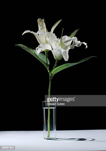 still-life shot of lilies