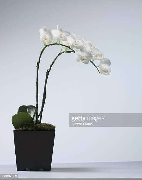 still-life shot of orchids