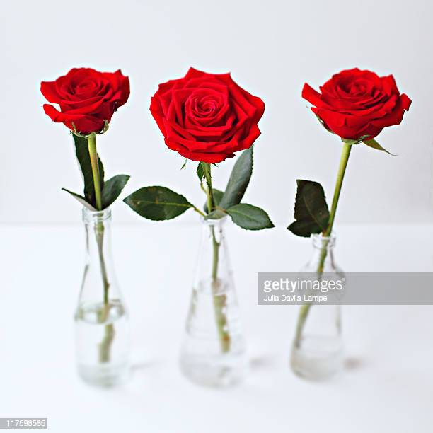 still-life with three red roses - julia rose stock pictures, royalty-free photos & images