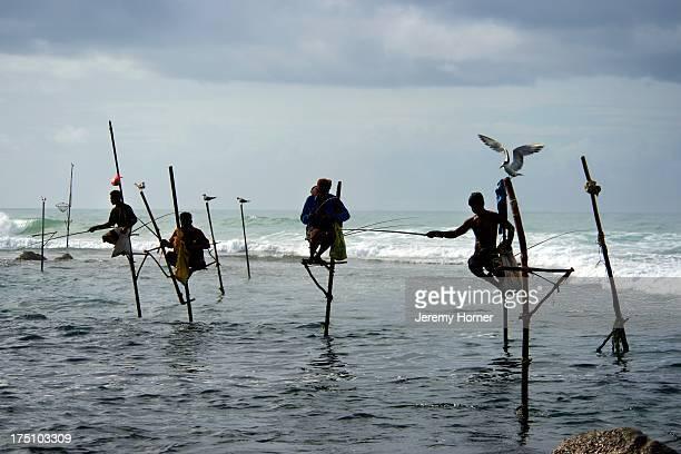 Stilt fishermen at dawn Unawatuna near Galle Sri Lanka