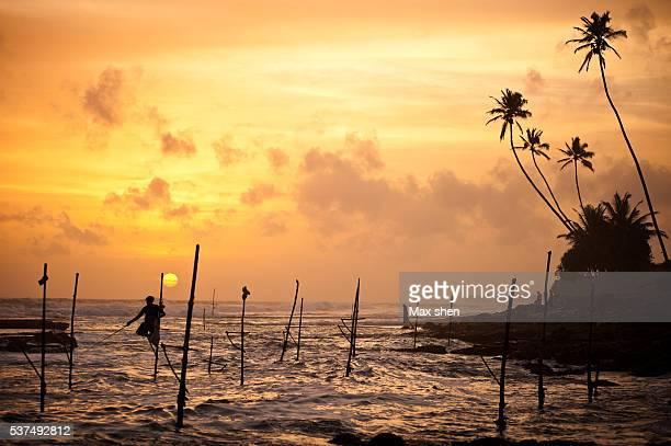 stilt fishermen fishing at koggala beach in sri lanka. - sri lanka fotografías e imágenes de stock