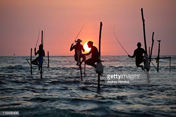 stilt fishermen in sri lanka - sri lanka fotografías e imágenes de stock
