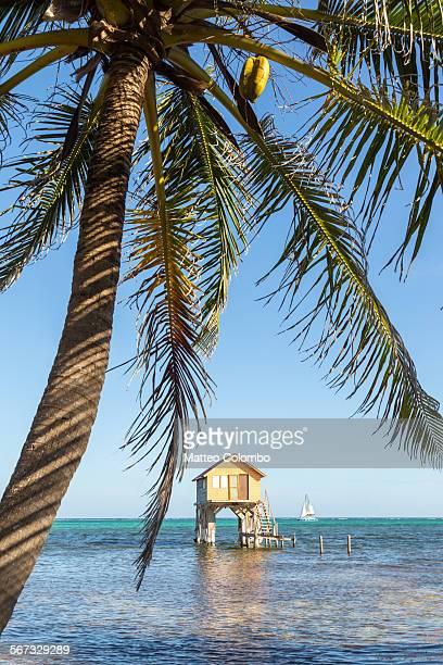Stilt hut, sail boat and palm tree, Belize