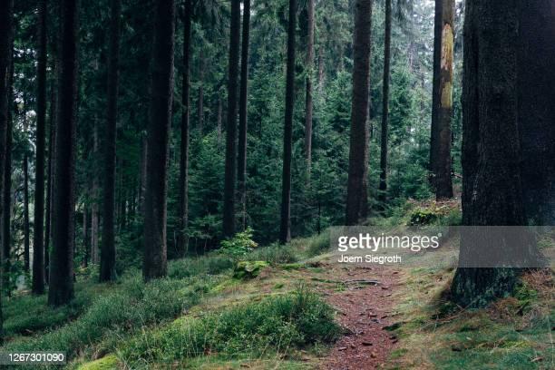 stimmungsvoller wald im harz - wald stock-fotos und bilder