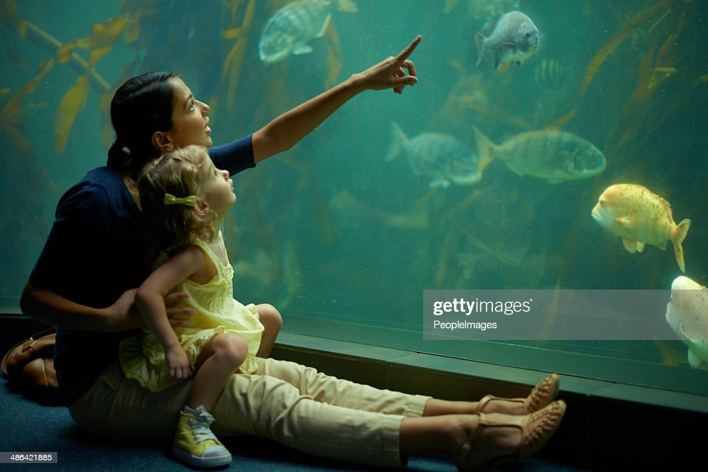 Stimulating her mind with the sea-life : Stock Photo