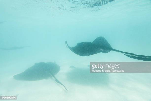 Stingray City Antigua and Barbuda