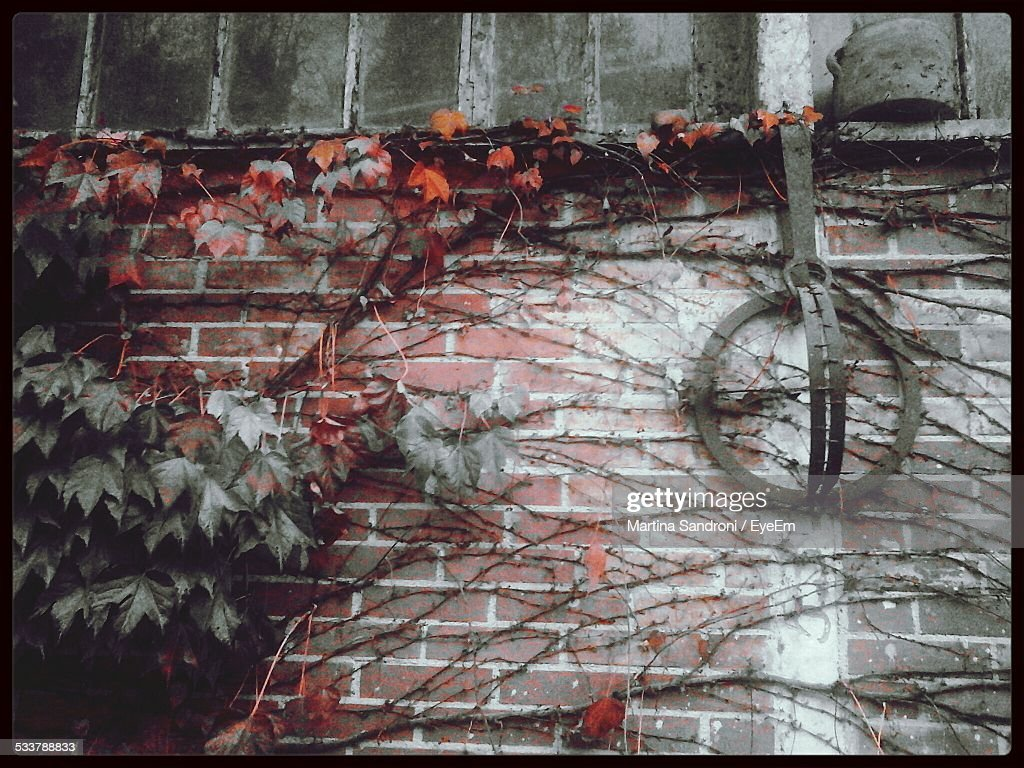 Stirrup Hanging Against Brick Wall : Foto stock