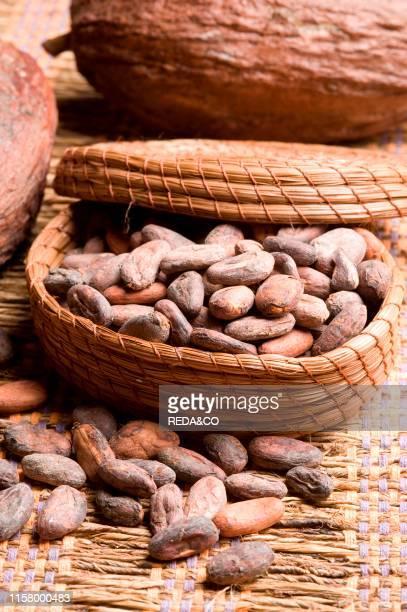 cocoa cocoa beans cocoa pods spices etc etc