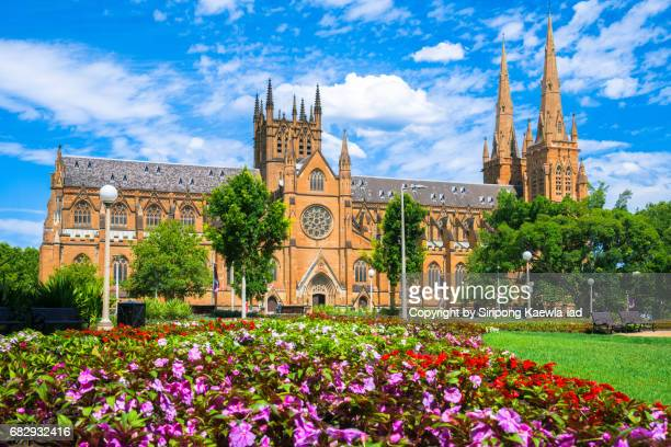 St.Mary's Cathedral with blossom flowers in foreground, Sydney, Australia.