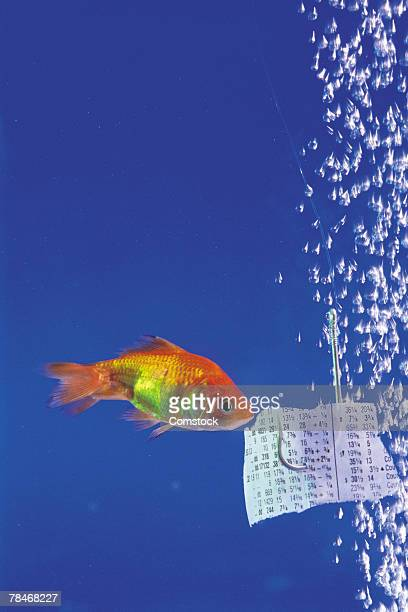 Stock prices luring goldfish