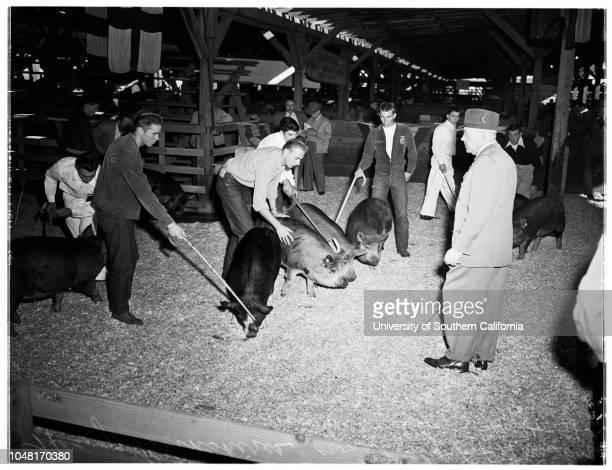 Stock Show, 24 November 1951. Junior Terry -- 17 years;Len Hamilton -- 16 years;Dee Wilson -- 17 years;Woodrow Wilson -- 13 years;Richard Kindler --...