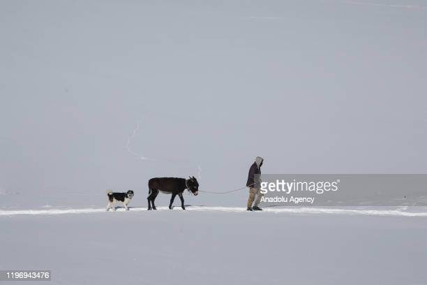 A stockbreeder a donkey and a dog walk amid snow at a countryside following snowfall during winter season in Van Turkey on January 27 2020 The life...