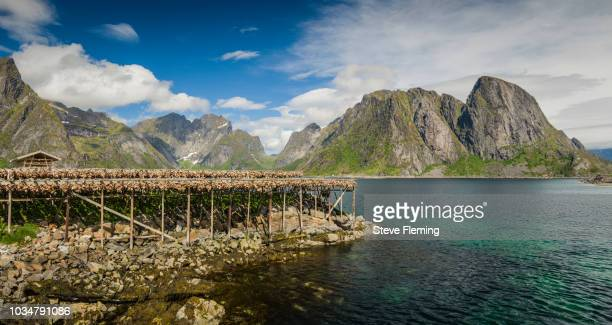Stockfish drying on open air racks at Reine, Lofoten Islands, Norway.
