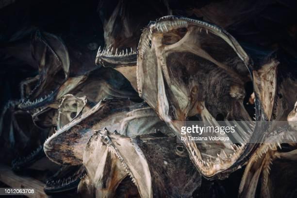 stockfish selling in small village near Reine, Moskenes, Lofoten Islands, Norway