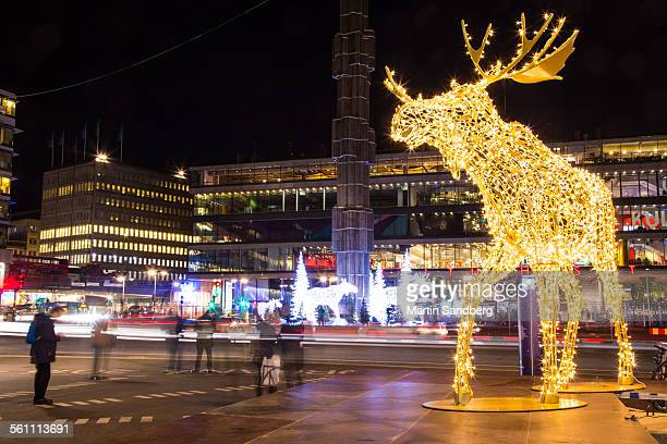 Stockholm and the Moose