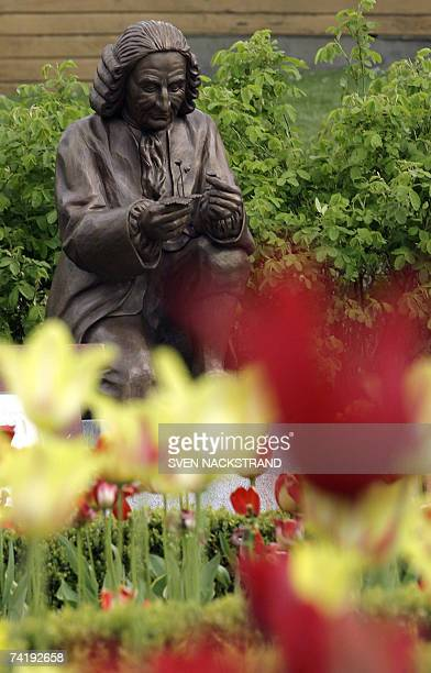 Statue of botanist Carl Linnaeus, stands along the Linnaeus botanic track 18 May 2007 arranged for the 300 anniversary of Linnaeus' birth, in the...