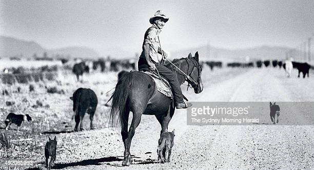 Stockman Bob Ranclaud searches for food and water for 300 head of cattle on a stock route near Gunnedah NSW October 1993
