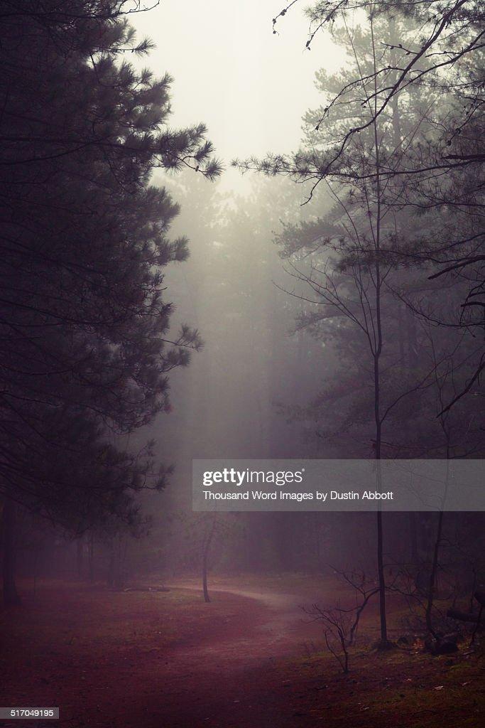 Stolen Moments of Light : Stock Photo
